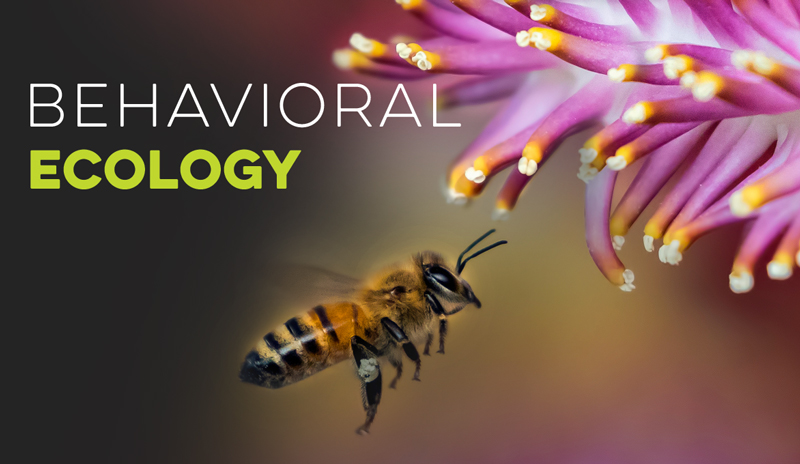 Behavioral Ecology Banner for Ecology Models - Virtual Biology Lab