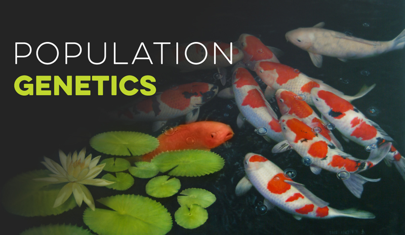 Population Genetics Banner for Evolution Models - Virtual Biology Lab