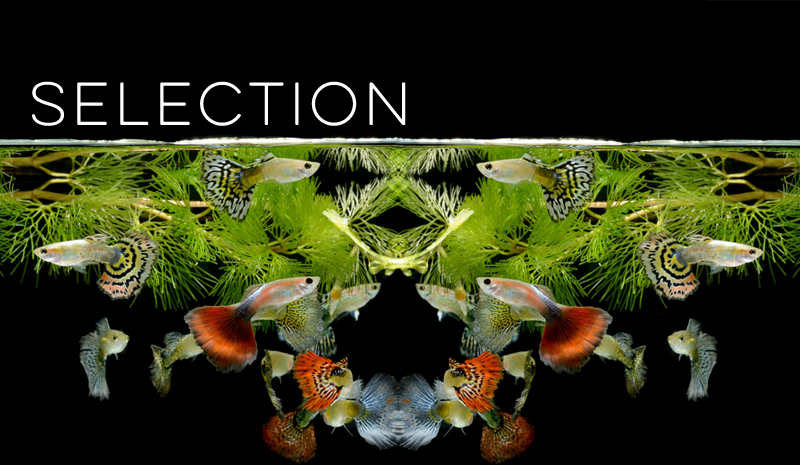 Selection Banner for Evolution Models - Virtual Biology Lab