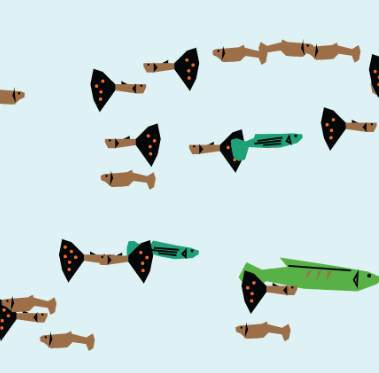 Screenshot of Endler's Guppies Model - Virtual Biology Lab